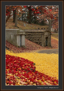 Woodland_0067_framed