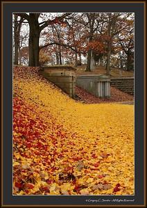 Woodland_0079_framed