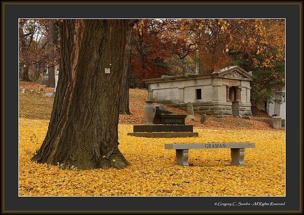 Woodland_0003_framed