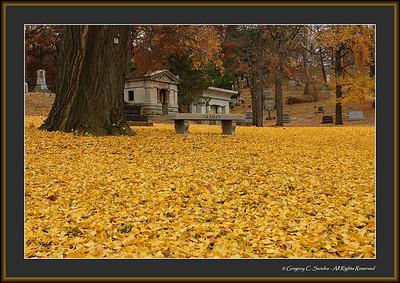 Woodland_0009_framed
